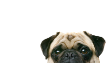 CisoGame_FullXBL0417_Y1 Screenshot 2