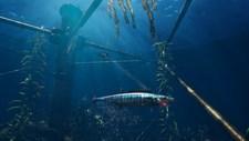 Freediving Hunter: Spearfishing the World Screenshot 3