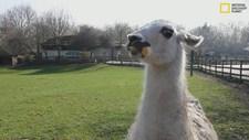 VALA: Vicious Attack Llama Apocalypse Screenshot 2